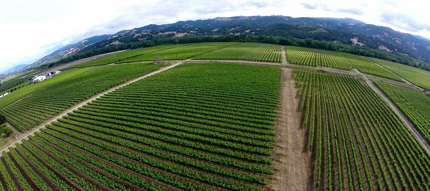 Decoy Brownell Vineyard Feature Image