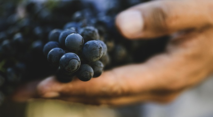 History of Sonoma Wine